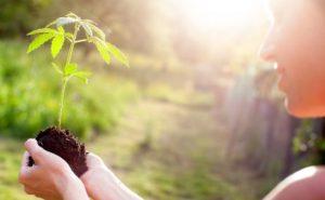 Health Benefits Of Using Cannabis